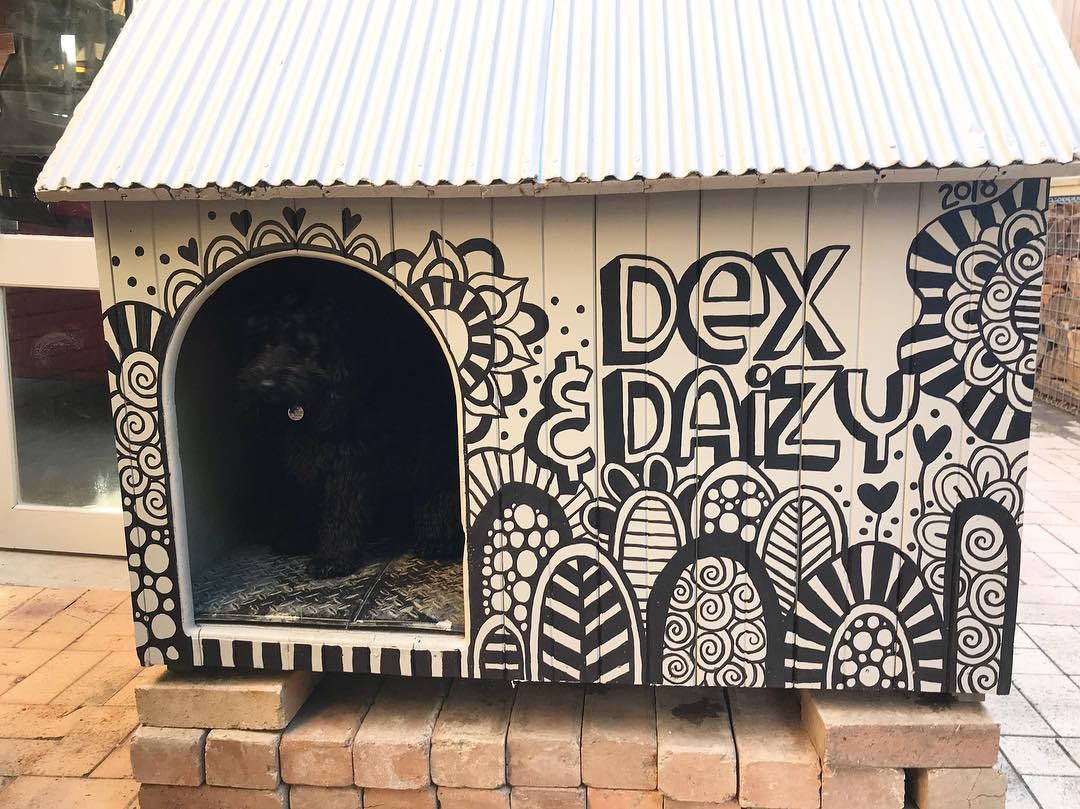 Tazi dog kennel